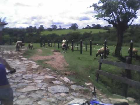 Nas fazendas o contato com os animais e moradores são momentos especiais.